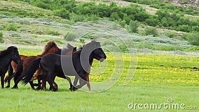 Cavalli che corrono nel prato archivi video
