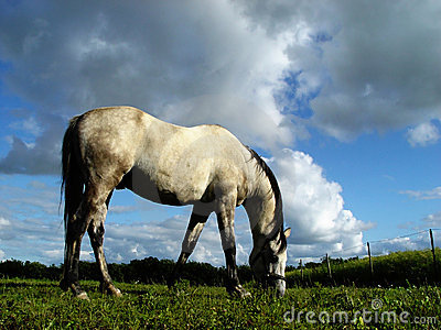 Cavallo bianco 2