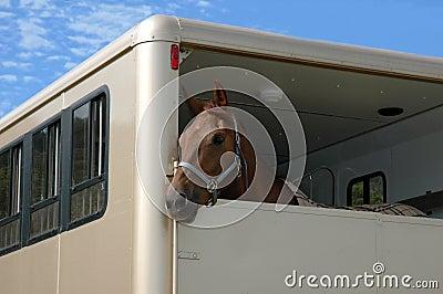 Cavallo nel rimorchio