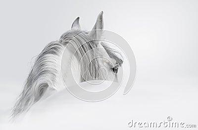 Cavalo andaluz em uma névoa