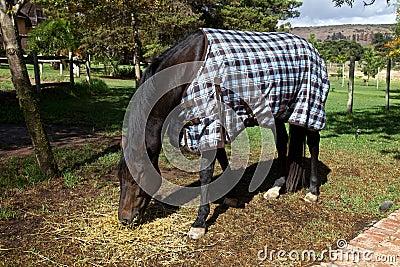 Cavalo, cobertor