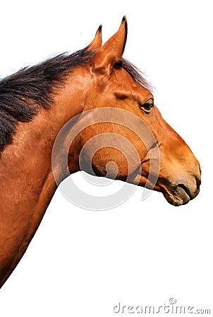 Cavalo de Brown