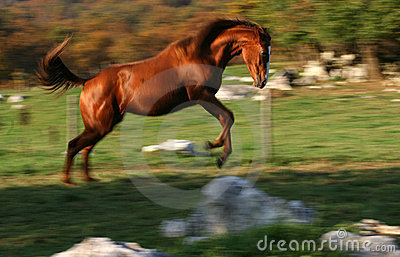 Cavalo de competência
