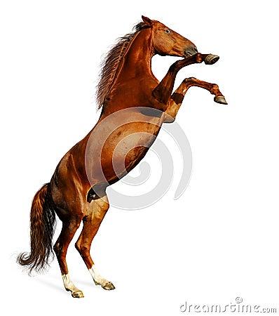 Cavalo de louro