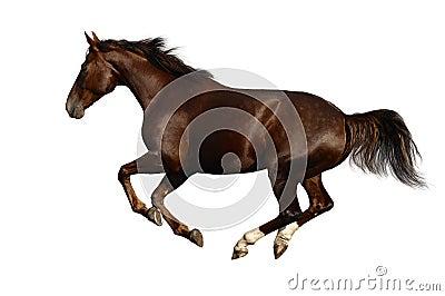 Cavalo do galope