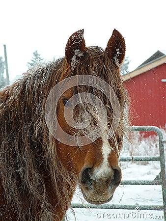 Cavalo do inverno