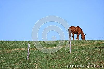 Cavalo em um monte