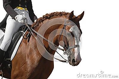Cavalo isolado no branco