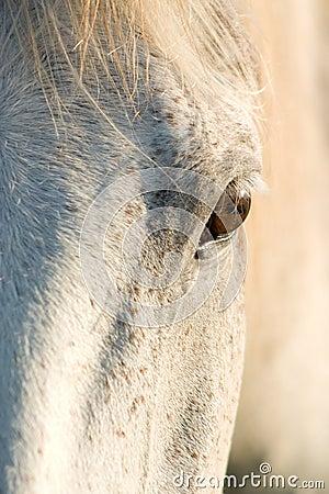 Cavalo olhar fixamente
