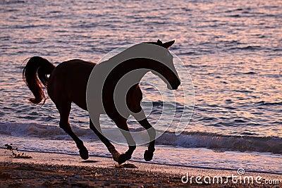 Cavalo que corre através da água