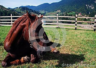 Cavalo que relaxa