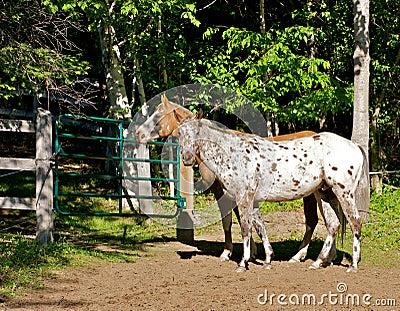Cavalos de exploração agrícola