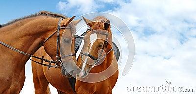 Cavalos do Sorrel