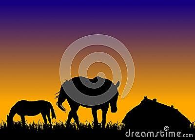 Cavalos no pasto no por do sol perto do estábulo