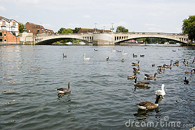 Caversham Bridge, Reading, Berkshire