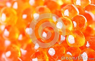 Caviar vermelho fresco