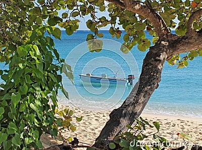Cayman Islands Fishing