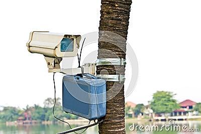 Cctv camera on tree