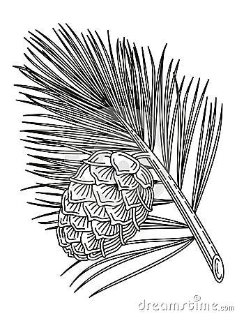 Cedar branch with cone