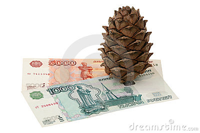 Cedar cone and money