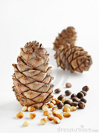 Cedar cones and nuts