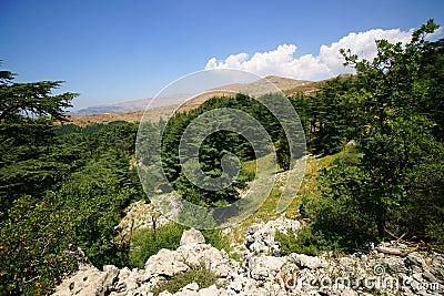 Cedar Reserve, Tannourine, Lebanon