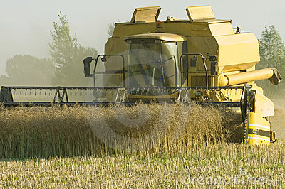 Ceifeira de liga no salário do milho