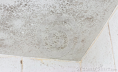 Ceiling mould mildew stock photo image 47111195 - What causes mold on ceiling in bathroom ...