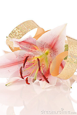 Celebrate With A Lily