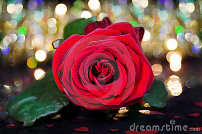 Celebrating love - red rose over fairy lights