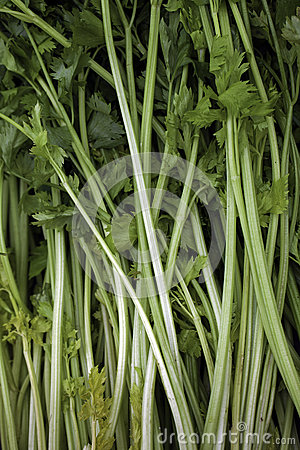 Celeries