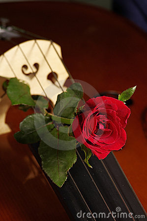 Cello and red rose