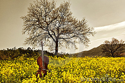 Cello in the yellow