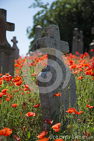 Free Cemetery Headstone With Poppies Stock Photos - 32343013
