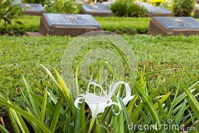 Cemetery in Kanchanaburi, Thailand
