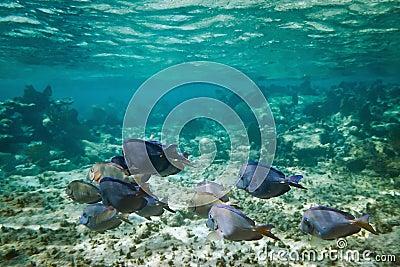 Cenário subaquático do mar do Cararibe