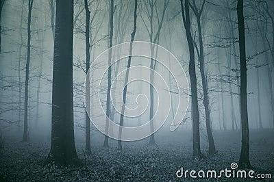 Cena assustador de uma floresta escura
