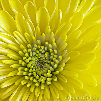 Free Center Disk Flower Square Royalty Free Stock Photo - 6126745