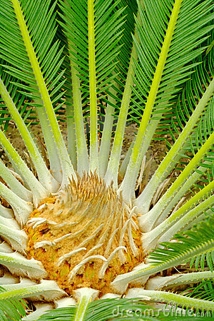 Center of a palmtree