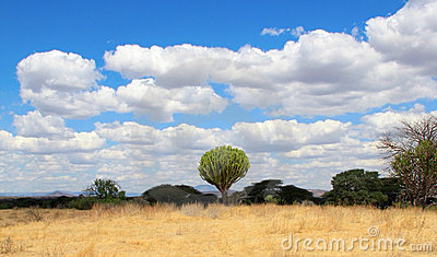 Central african bushy landscape with cactus