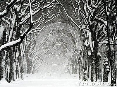 Central Park Blizzard 01