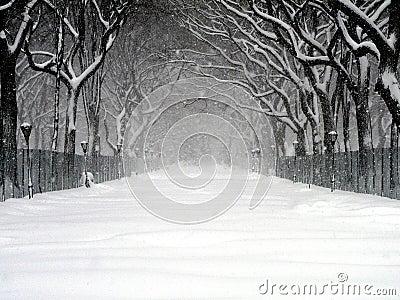 Central Park Blizzard 03