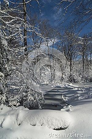 Central Park, New York City snow styorm