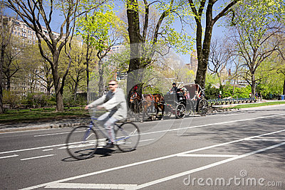 Central Park NYC Editorial Stock Photo