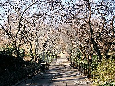 central park scenery 2