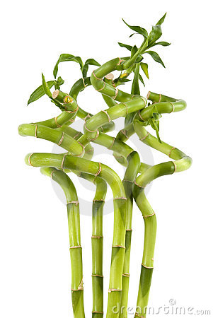 Centrales en bambou