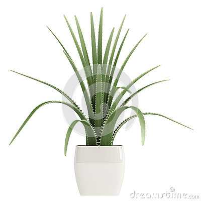 Free Century Plant Or Maguey Royalty Free Stock Photo - 26783565