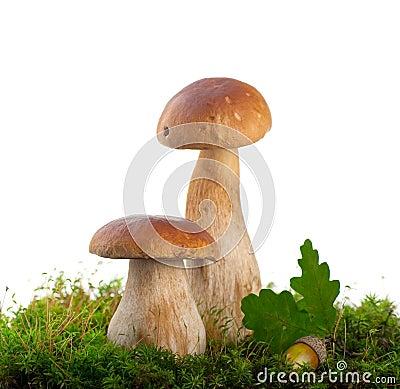 Free Cep Mushrooms, Boletus Edulis Stock Images - 26502034