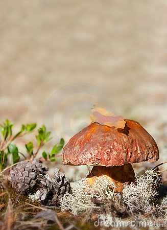 Cep in nature