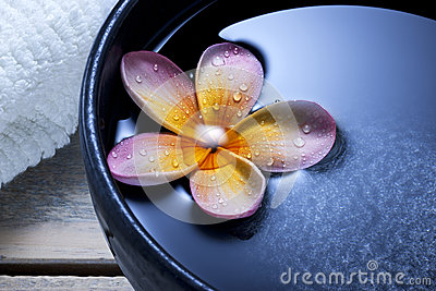 Spa Flower Water Bowl Background